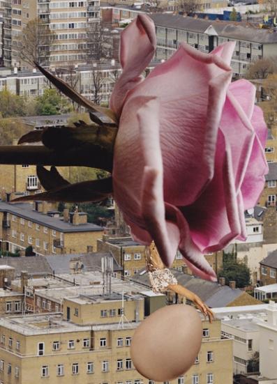 Urban Fairytale: The Rose (2013)
